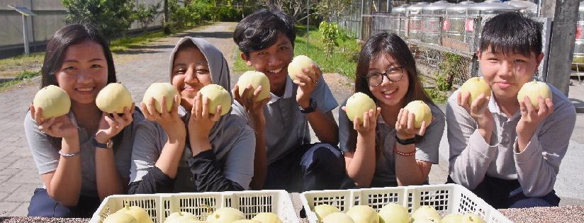 栽種有機美濃瓜~慈科大印尼專班學生化身有機小農。(20200720)